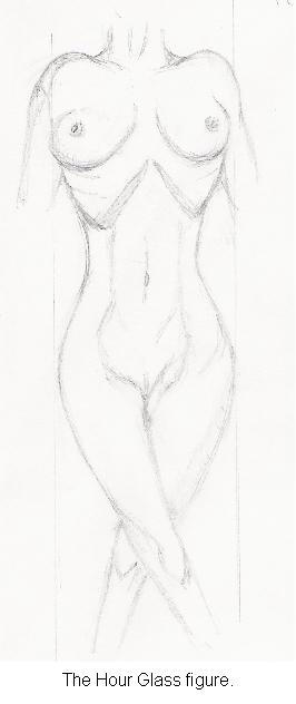Hourglass female nudes. The hour glass figure. Nude detail