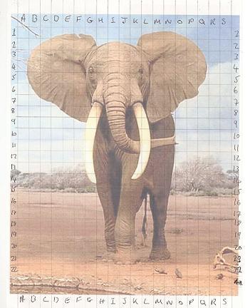 Elephant-picture-with-grid